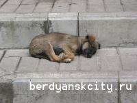 В Бердянске растет количество бродячих собак