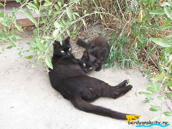 Кошки Бердянска