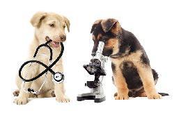 Собака тест: как реагировать в чрезвычайной ситуации
