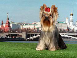 Москва бюджетной бывает!